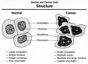 cancercells